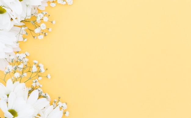 Cornice floreale vista dall'alto con margherite bianche