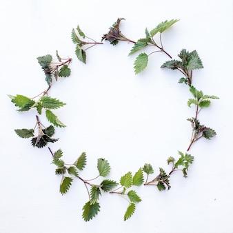 Cornice rotonda con rami e foglie verdi ortica giovane. modello foglia. vista piana, vista dall'alto, copia spazio