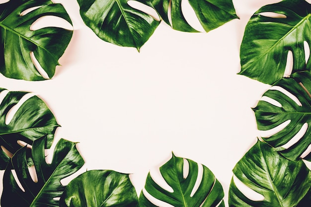 Cornice tropicale di monstera delle foglie su fondo variopinto