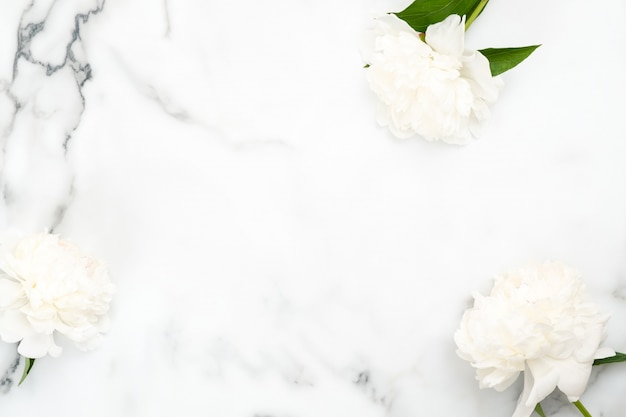 Cornice vista dall'alto di fiori di peonia bianca