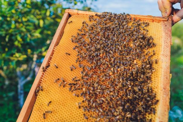Cornici di un alveare. apicoltore raccolta miele. il fumatore di api viene utilizzato per calmare le api prima della rimozione della cornice. apicoltore che controlla alveare dell'ape.
