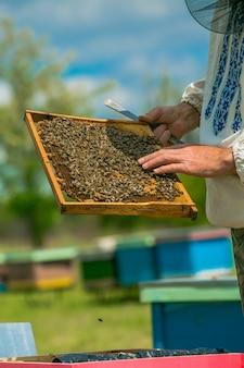 Cornici di un alveare. la mano dell'apicoltore sta lavorando con api e alveari sull'apiario.