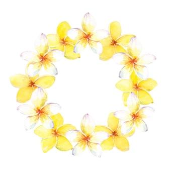 Corona tropicale dell'acquerello con fiori bianchi e gialli di plumeria