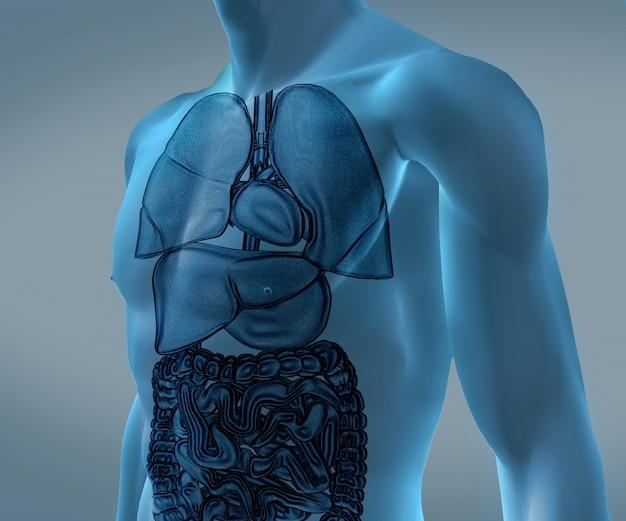 Corpo blu digitale trasparente con organi