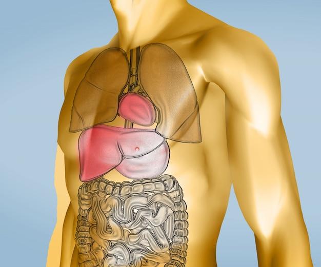 Corpo digitale giallo e trasparente con organi