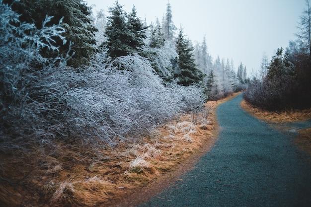 Corridoio tra alberi ad alto fusto