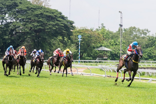 Corsa di cavalli ad alta velocità