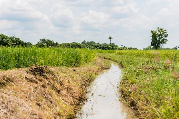 Corso d'acqua nel campo di riso