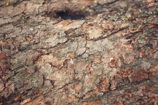 Corteccia d'albero con muschio