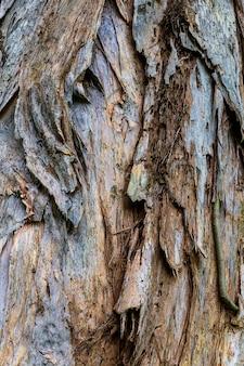 Corteccia d'albero texture di sfondo