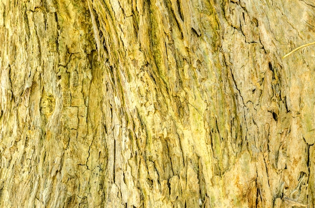 Corteccia del fondo e della struttura dell'albero