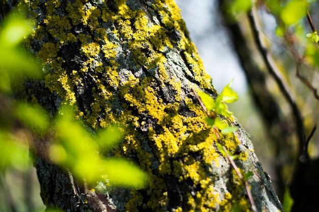 Corteccia di albero muscosa con luce solare