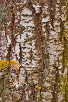Corteccia di betulla vicino sfondo