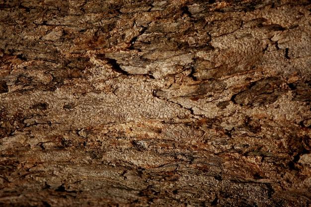 Corteccia di legno texture di sfondo