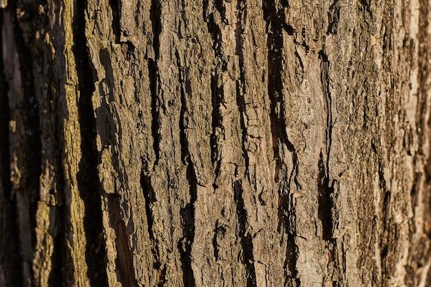 Corteccia di un grande albero close-up. sfondo, trama