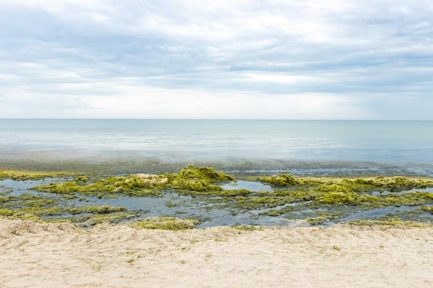 Costa piena di alghe verdi marine. concetto di ecologia e calamità naturali