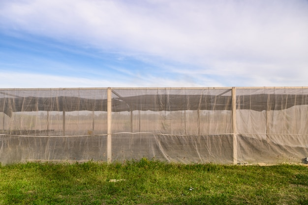 Costruzione della serra per le verdure coltivate con cielo blu