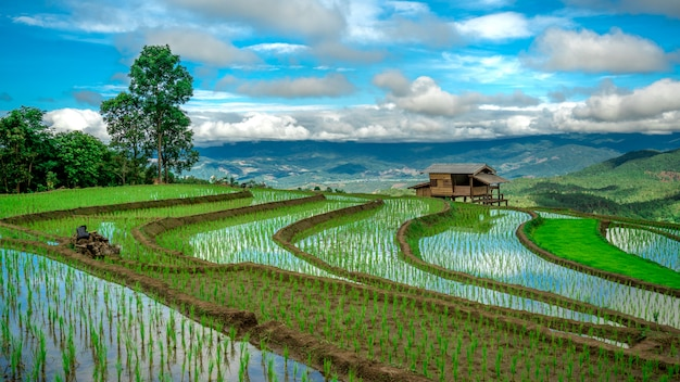 Cottage paddy rice field mountain view