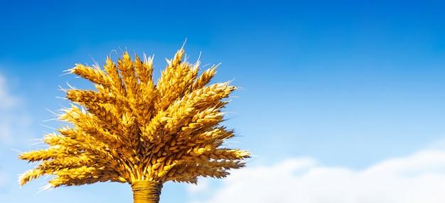 Covone di grano sopra cielo blu