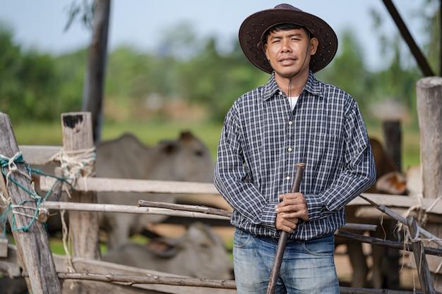 Cowman nella stalla e le sue mucche