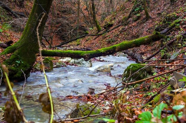 Creek tra gli alberi della foresta boscosa