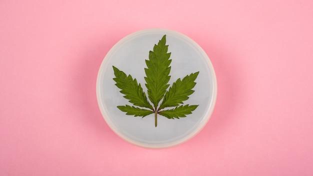 Crema corpo idratante da una pianta di marijuana biologica, cura della pelle, cosmetici alla cannabis, crema con olio farmaceutico di canapa cbd