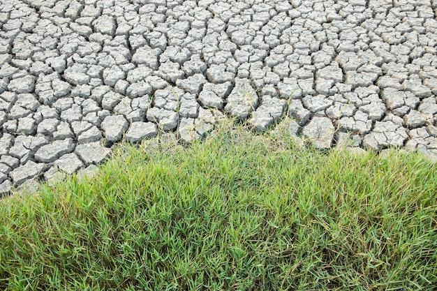 Crepa terreno nella stagione secca, l'erba verde. effetto verme globale, selezionare fucus