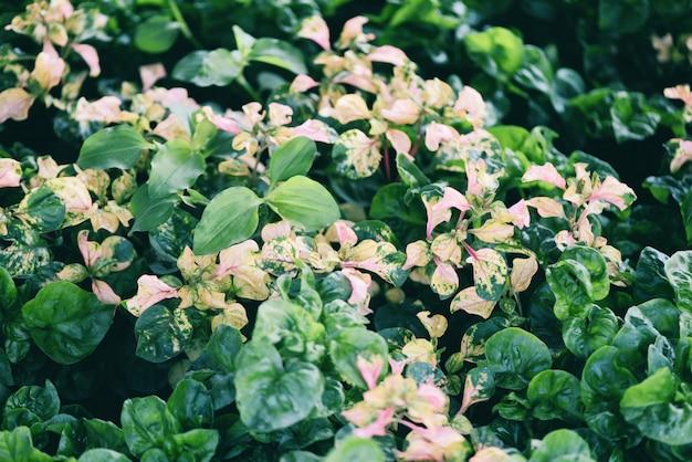 Crescione che cresce nella struttura della foglia di verde della pianta dell'orto. insalata ed erbe fresche di crescione