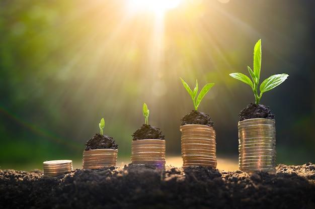Crescita del denaro risparmio di denaro. l'albero superiore conia per mostrare il concetto del commercio crescente