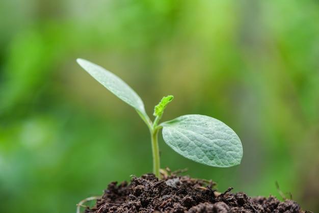 Crescita della pianta giovane su verde neutrale - nuova semina della pianta di agricoltura che cresce sul suolo nel giardino