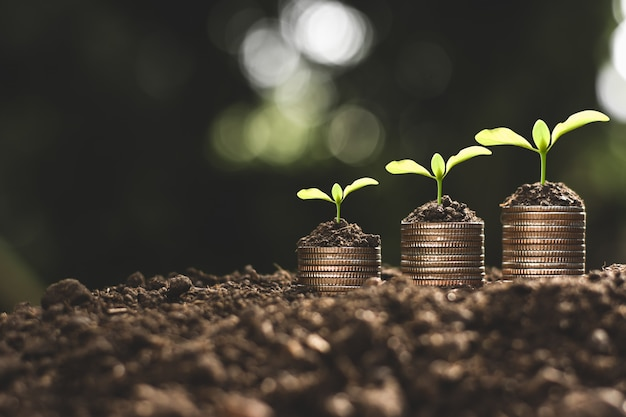 Crescita finanziaria, monete e piantina.