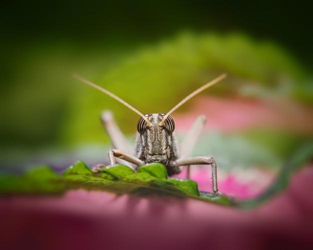 Cricket verde in piedi su una superficie di legno.