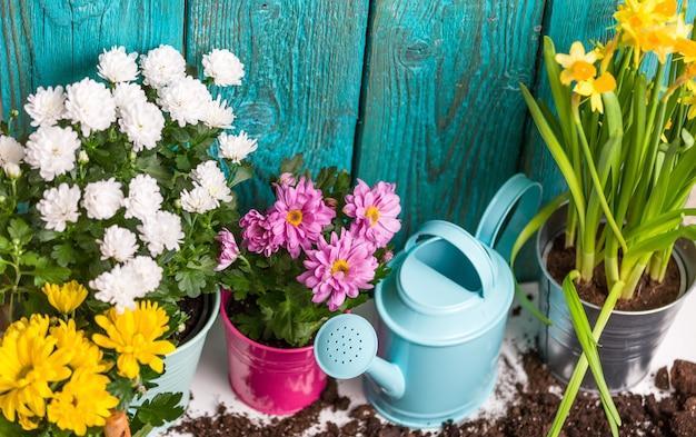 Crisantemi colorati in vaso vicino recinzione in legno
