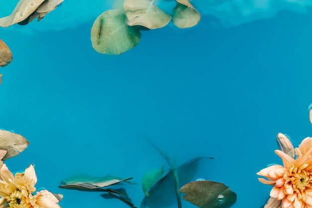 Crisantemi in acqua blu con spazio di copia