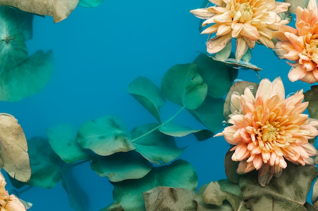 Crisantemi pallidi distesi piatti in acqua di colore blu