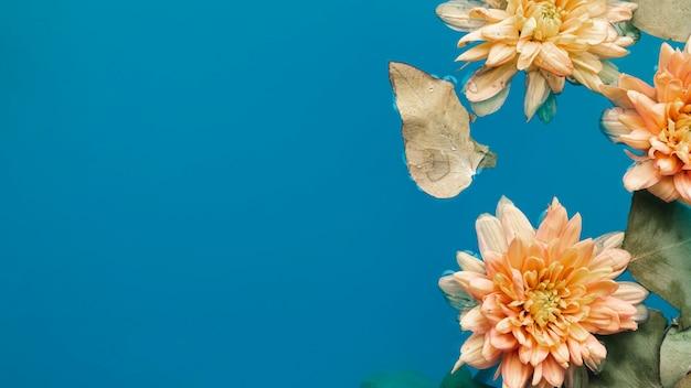 Crisantemi pallidi vista dall'alto in acqua blu con spazio di copia