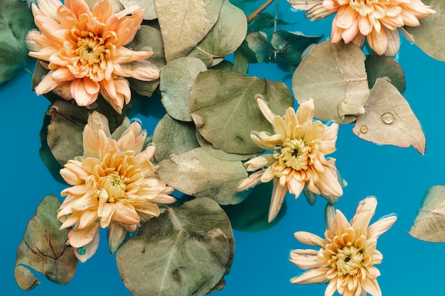 Crisantemi pallidi vista dall'alto in acqua blu