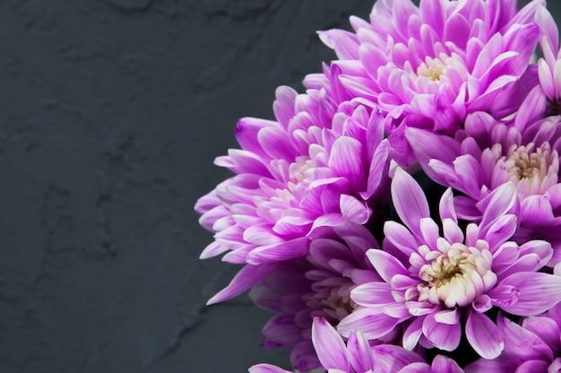 Crisantemi rosa su grigio
