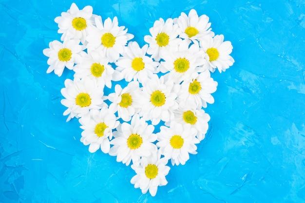 Crisantemi su sfondo blu