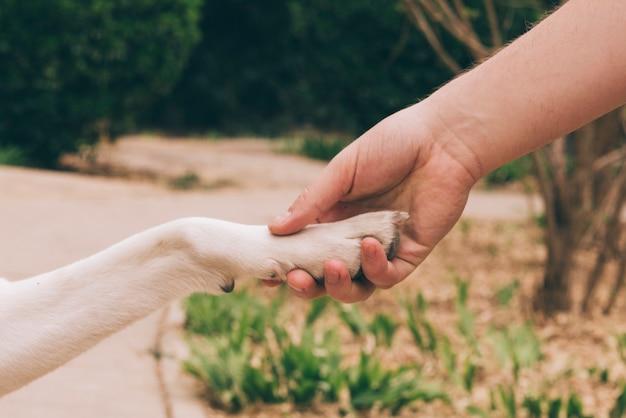 Crop persona che tiene la zampa di cane