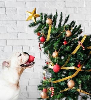 Cucciolo adorabile del bulldog che si leva in piedi vicino ad un albero di natale