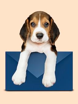 Cucciolo adorabile del cane da lepre con una busta blu
