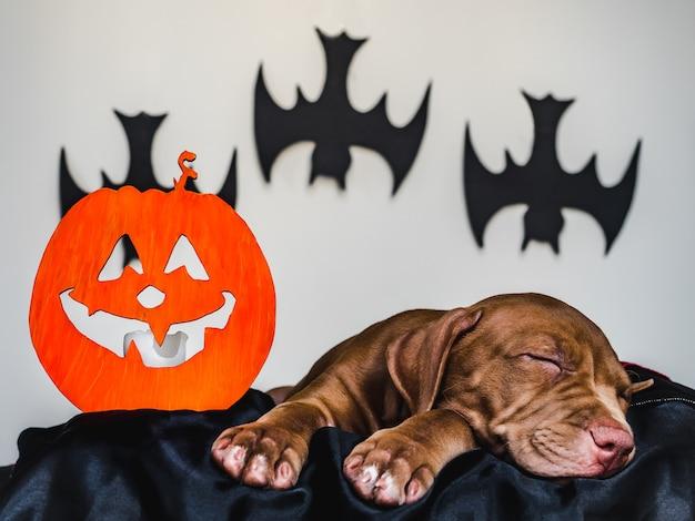 Cucciolo affascinante che si trova su un tappeto nero