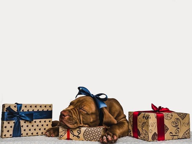 Cucciolo affascinante e una scatola festiva