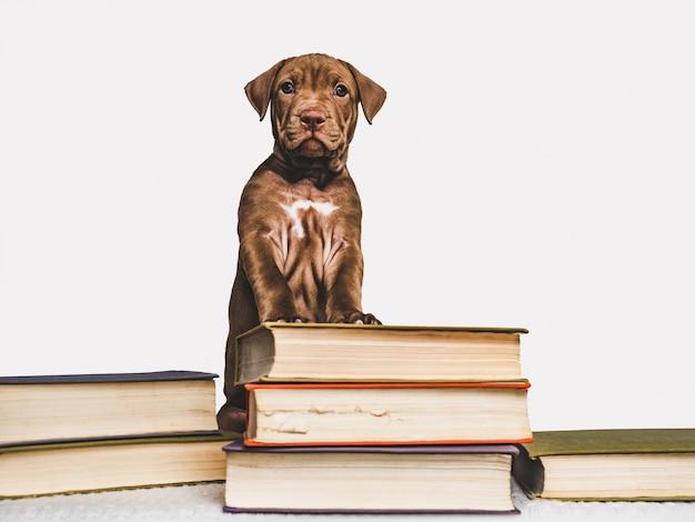 Cucciolo carino e libri vintage. di nuovo a scuola