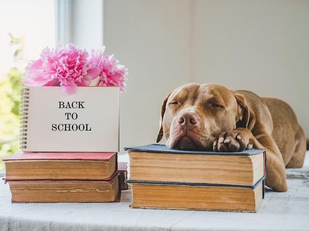 Cucciolo carino e libri vintage. foto dello studio