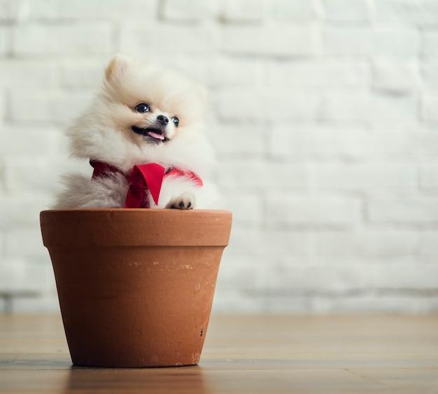 Cucciolo dell'animale domestico del cane dell'animale canino del cane