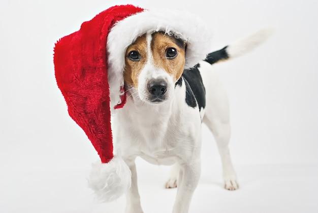 Cucciolo di cane carino con cappello rosso santa