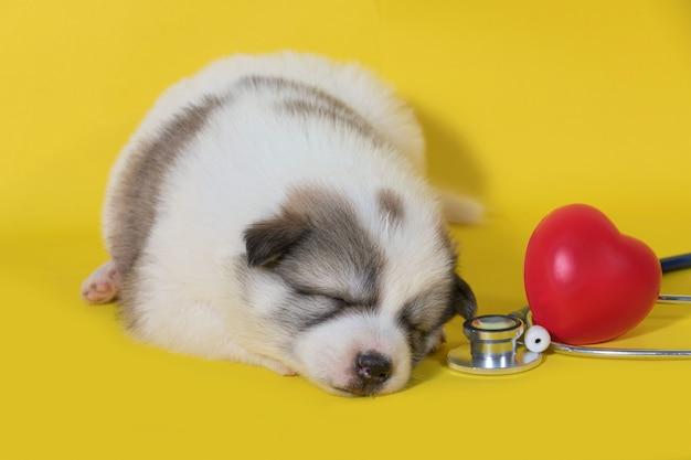 Cucciolo di cane che dorme con lo stetoscopio e il cuore rosso