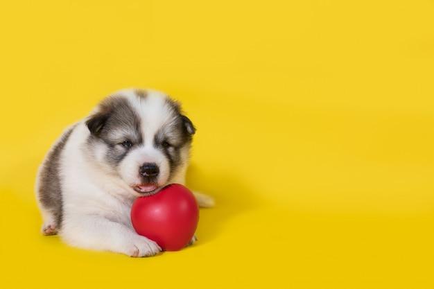 Cucciolo di cane con cuore rosso